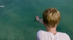 Мой друг дельфин Эхо