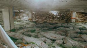 Акулы: Вымирание