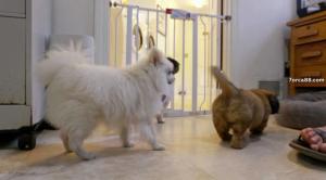 Жизнь в собачьей будке