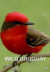 Дикая природа Уругвая
